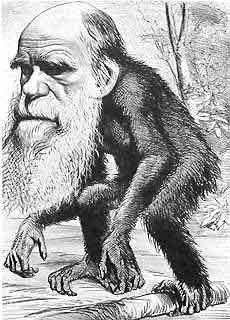 Darwin-Affe