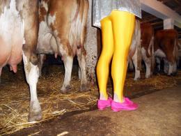 Éva Szombat: Legs in the stable, Tiszaujvaros, 2012; © Éva Szombat