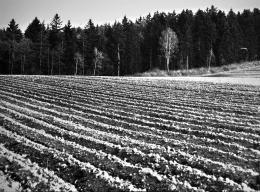 Heinz Mack, Naturfotografie aus Lollar/Hessen, um Mitte der 1940er Jahre, gerahmt, 52 x 64 cm, Archiv Atelier Heinz Mack © Heinz Mack/VG Bild-Kunst, Bonn, 2021 Foto: Heinz Mack