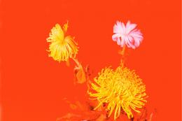 Lisa Holzer, Todesblumen Ohne Grün (Chrysanthemen), 2018 (Ausschnitt)