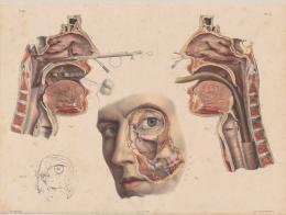 Handkolorierte Lithographie nach einer Zeichnung von Nicolas Henri Jacob (1782-1771), aus: Jean Baptiste Marc Bourgery: Médicine Opératoire, Paris, 1840 31,2 x 42,1 cm Graphische Sammlung ETH Zürich