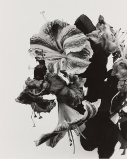 Nobuyoshi Araki, Laments, 1990-1996, Silbergelatineabzug, Albertina, Wien – The Jablonka Collection © Nobuyoshi Araki