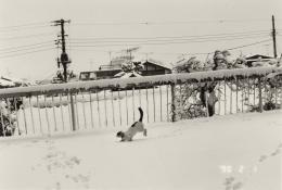 Nobuyoshi Araki, Sentimental Journey: Winter Journey, 1.2.1990, Silbergelatineabzug, Albertina, Wien – The Jablonka Collection © Nobuyoshi Araki