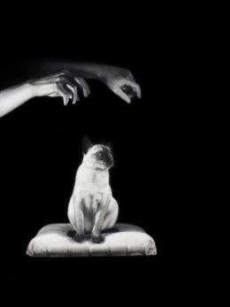 "Drago Pesic, ""Mysterious Pair of Hands Hypnotize a Siamese Cat"", 2020, Öl auf Leinwand, 40 x 30 cm © Drago Pesic"