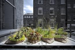 Pocket Habitats, Mobile Begrünungsinitiative von Arup, London © Foto: Thomas Graham / Arup