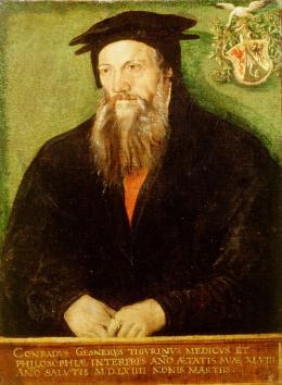 Gerettet: Tobias Stimmer, Bildnis Conrad Gessner, 1564, Museum zu Allerheiligen Schaffhausen