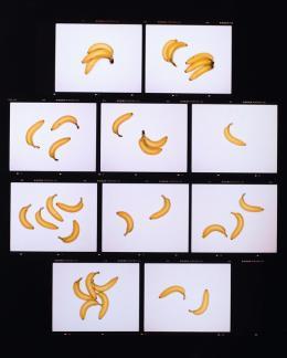 Sissi Farassat, Contactsheet Banane, 2020, 65×75 cm, Auflage: 5+II