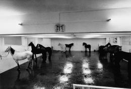 Jannis Kounellis, Senza titolo («Dodici cavalli vivi»), 1969, Foto: Claudio Abate © 2019, ProLitteris, Zürich