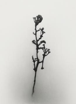 Erich Gruber - Panicula - 2018 - Bleistift auf Papier - 52,2 x 38,3 cm (c) Galerie Welz