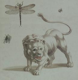 Peter Schenck: Religiöse Darstellung, Löwe und Insekten spätes 17. Jh./frühes 18. Jh. Farbstich; Von der Heydt-Museum Wuppertal