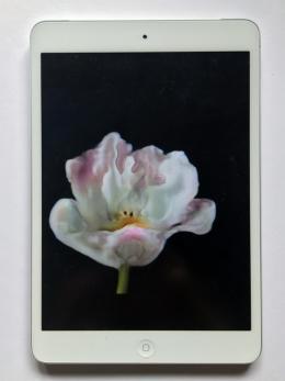 Anna Ridler, detail of Bloemenveiling auction, 2019