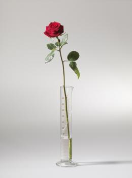 """Joseph Beuys, """"Rose für direkte Demokratie"""", 1973, Meßzylinder aus Glas, mit Schriftzug 33,5 x 5 x 5 cm, Ort: Weiße Rose Saal im Justizpalast, Prielmayerstraße 7, 80335 München © VG Bild-Kunst, Bonn 2021"""