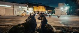 Die Hauptdarsteller von 'Space Dogs' sind Straßenhunde (Bild: zVg/ © Raumzeitfilm)