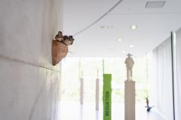 """Ein Schwalbennest am Betonring des Riesenrundgemäldes in der Ausstellung """"(un)natürlich urban""""  © TLM / Martin Gamper"""