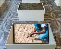 Uriel Orlow-Soil Affinities, 2018-installation view, Villa Romana Florence, 2019 (Photo- Ela Bialkowska). (c) VBK Bildkunst 2019